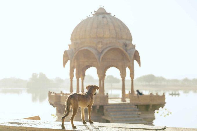 pies w Indiach