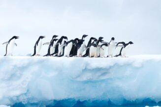 15 ciekawostki dla dzieci o pingwinach