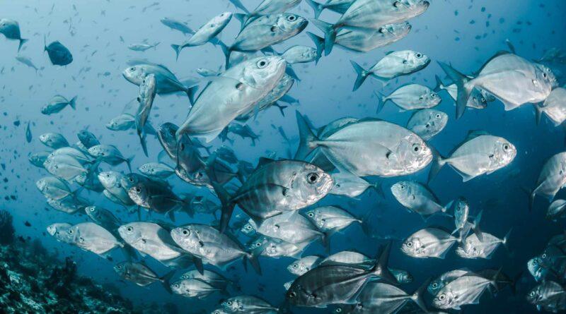 tuńczyki