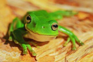 Ciekawostki, fakty oraz informacje o żabach dla dzieci i dorosłych